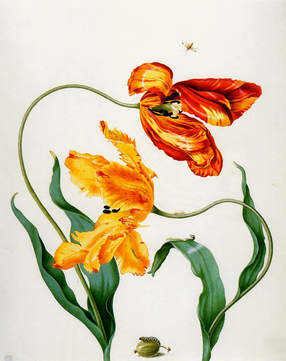http://artmight.com/albums/2011-02-07/art-upload-2/m/Merian-Maria/Merian-Maria-Sibylla-Flowers-x-Sun.jpg