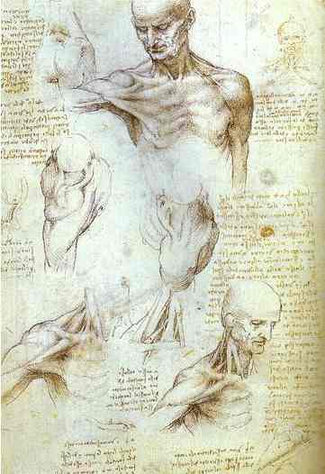 Leonardo da Vinci The Neck and Shoulder of a Man