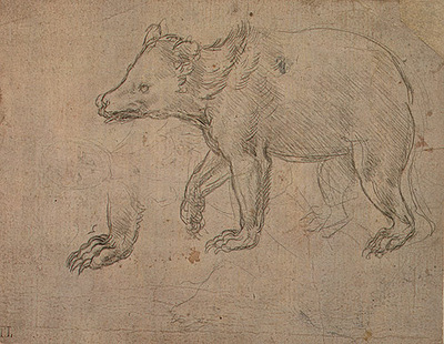 A Bear Walking