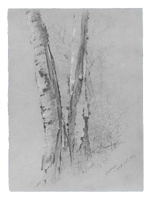 McEntee Jervis Study Of Birch Trunks