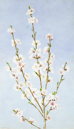 Hill John William Peach Blossoms
